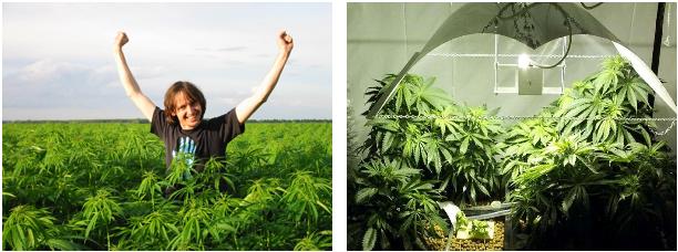 hennep_versus_marihuana