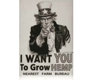 UncleSam_Your Country Needs Hemp_uitgelicht